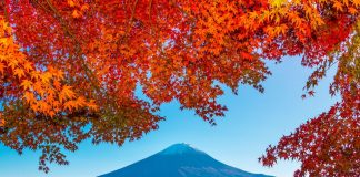 Du lịch mùa thu Đài Loan - Ngập tràn sắc thu