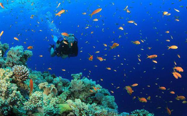 Ngắm cảnh san hô đảo ngọc Phú Quốc